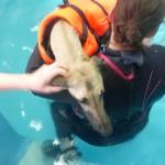 clooney_schwimmt